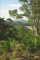 Forests, Parks, Culture, South Coast, NSW